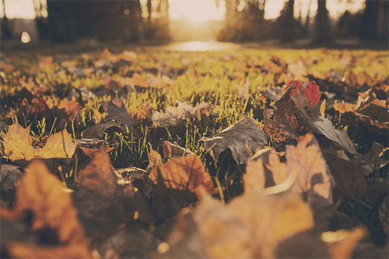 ramasser automne